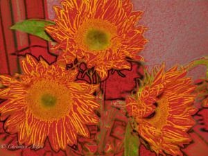 San Diego Sunflowers