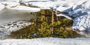 Snow forest reflections -9155