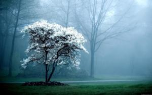 Tree in fog - Land Park