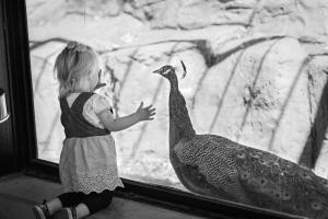 Child and peacock folsom zoo sanctuary 52318 allan black and whiteDSC 0230