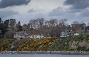 Coastline houses wildflower victoria b.c. canada allan 0885