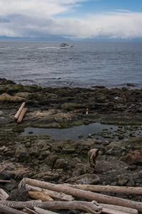 Coastline victoria b.c. canada allan 0883