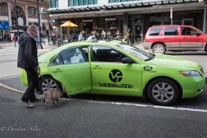 Man with dog taxi victoria b.c. canada allan 0820