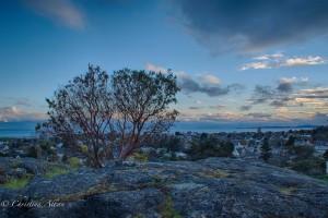 Manzanita bush view moss rock park victoria b.c. canada allan 1046 HDR