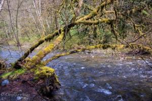 Moss Tree Goldstream Provincial Park victoria b.c. canada allan 0919
