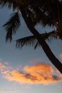 Palm tree with clouds maui 1787