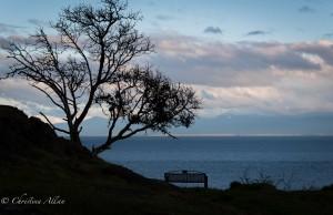 Silhouette tree bench moss rock park victoria b.c. canada allan 1045