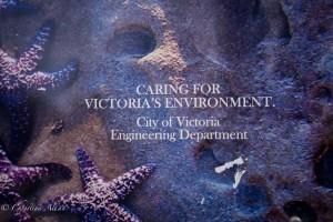 Starfish design metal box victoria b.c. canada allan 0828