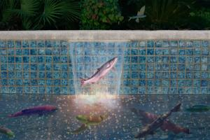 Suburban Salmon Run fish swimming pool collate Allan