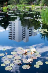 Water lilies urban reflection buildings denver botanical garden allan DSC 3815